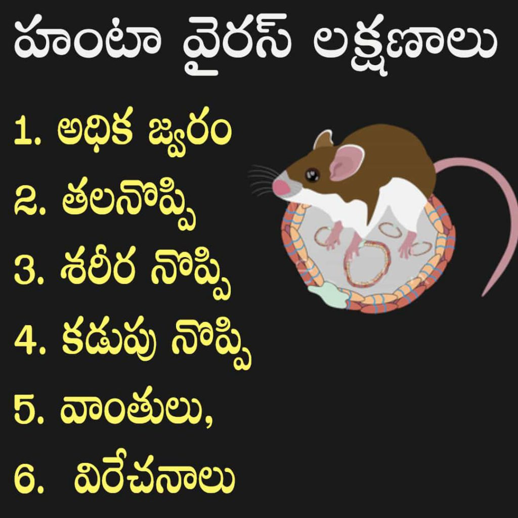 hantavirus symptoms in telugu